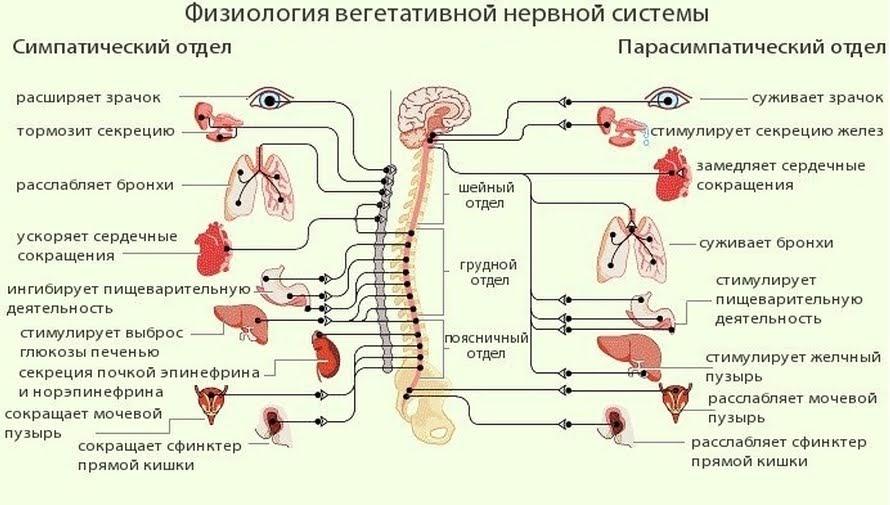 БОС-тренинги на Психфаке МГУ