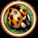 Bug Defender Icon