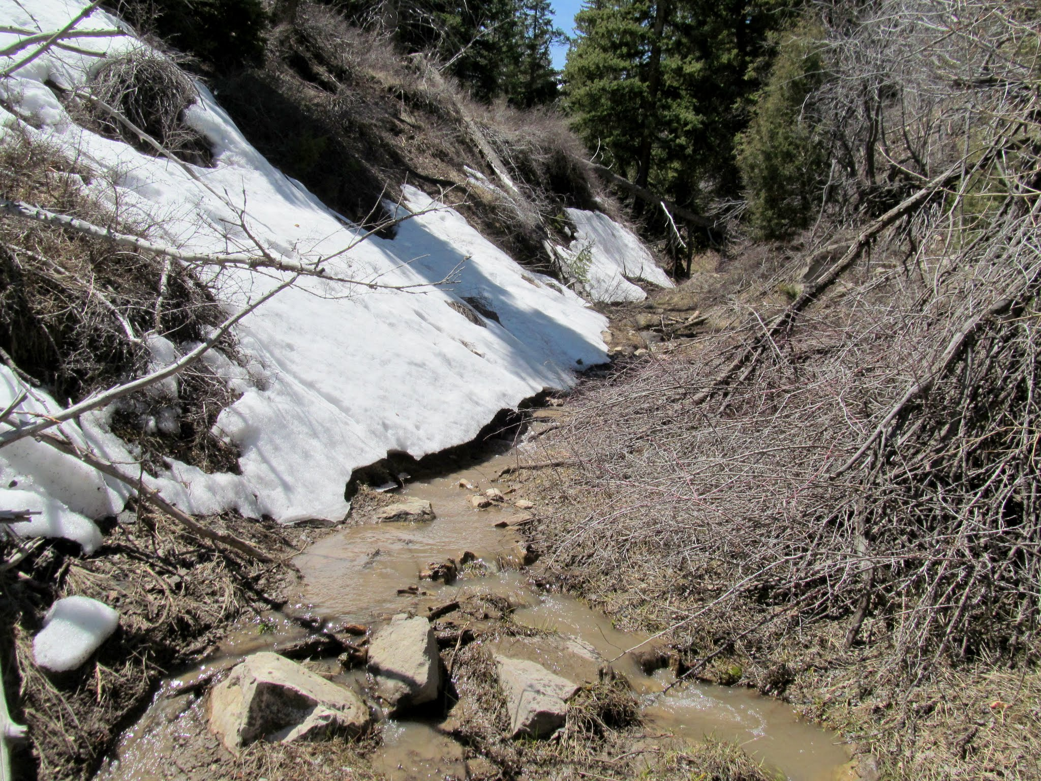Photo: Small drainage flowing with snowmelt