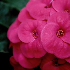 by Sudipta Ghosh - Flowers Flowers in the Wild