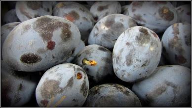 Photo: Prunul (Prunus domestica) - din Piata Agroalimentara de pe Str. Tineretului - 2016.09.21