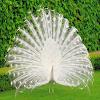 beautiful peacockLiveWallpaper