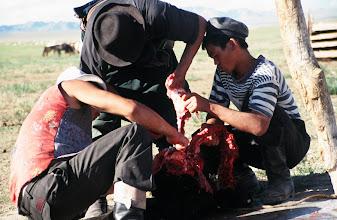 Photo: 03328 ナムジ家/ヤギ石焼料理準備/ボードック/首から下の皮を筒状に剥いだ中に解体した肉と焼石を詰めもどして、外側から火で焼く