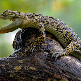 #1 by Yadi Setiadi - Animals Reptiles