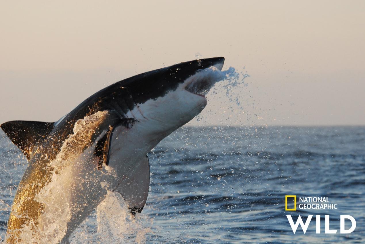Z:\Disney\National Geo\NG2020\היילייטס_יוני\OCEANS WEEK\NGWILD_Oceans-Week.jpg