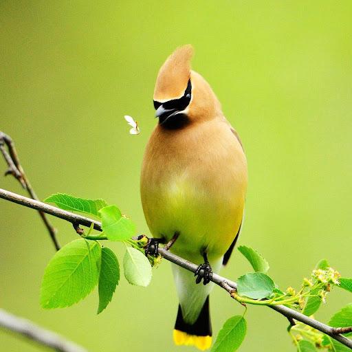 鳥類生活壁紙