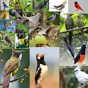 Kicau-Kicau Burung Terlengkap icon