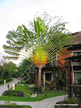 Photo: palm tree on our resort