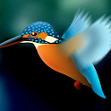 Kingfisher LiveWallpaper Trial icon
