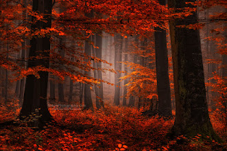 """Photo: Hi dear friends,  """"The Feelin's Gone"""" new photo in the Fall album.  You can easily buy a print of my photographs on Big Great Canvas http://bit.ly/tx61NW REMINDER Best of Autumn 2011 - The ebook : http://www.naturephotographie.com/best-of-automne-2011/ Best of Landscape Photographers (for inspiration) : http://www.naturephotographie.com/photographes-du-monde/ Orton effect : http://www.naturephotographie.com/effet-orton/  Cheers - and thanks for your support here on G+  #fallphotos #autumnphotography #naturephotography #photography  #forestphoto"""