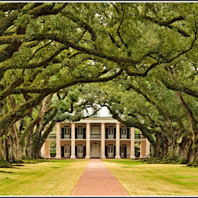 Oak Alley Plantation by Giancarlo Bisone - Buildings & Architecture Homes ( home, louisiana, plantation )