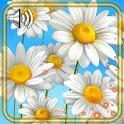 Camomiles Wild HD Live Wallpaper icon