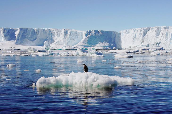 Un pingouin sur son iceberg