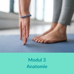 Hormonyogaausbildung - Modul 3