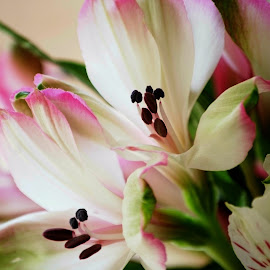 Pink and white flowers  by Brenda Shoemake - Flowers Flower Arangements