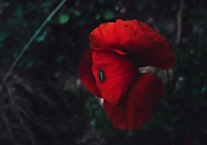 Passeggiata nel rosso di Eleonork