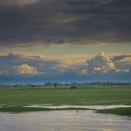 lagoon by Fereshteh Molavi - Landscapes Prairies, Meadows & Fields ( horse, clous, grass, water )