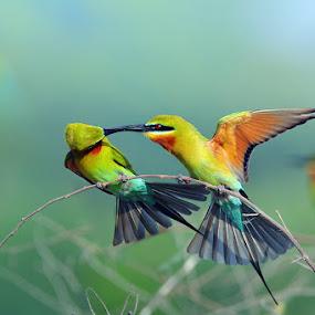 by Sasi- Smit - Animals Birds