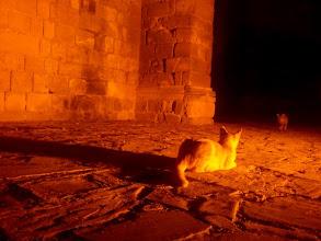 Photo: Kočky u kostela