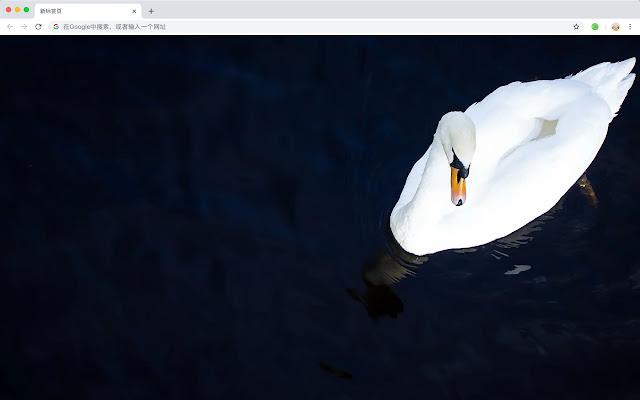 Mute Swan Pop HD Animals New Tabs Theme