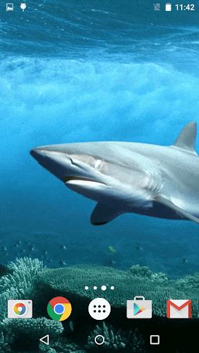 玩個人化App|鲨鱼 动态壁纸免費|APP試玩