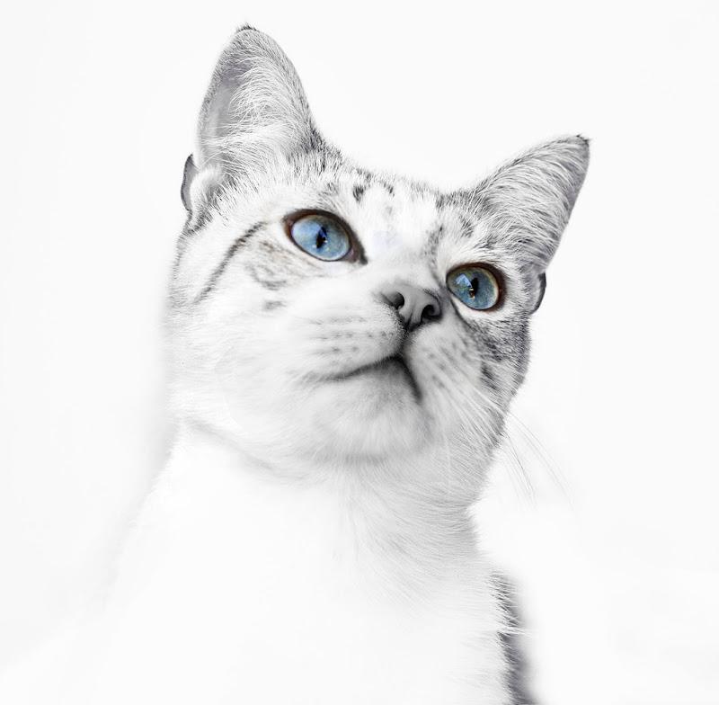 Figaro di Marlak