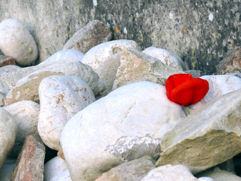 Un fiore tra mille pietre... di Jamie.