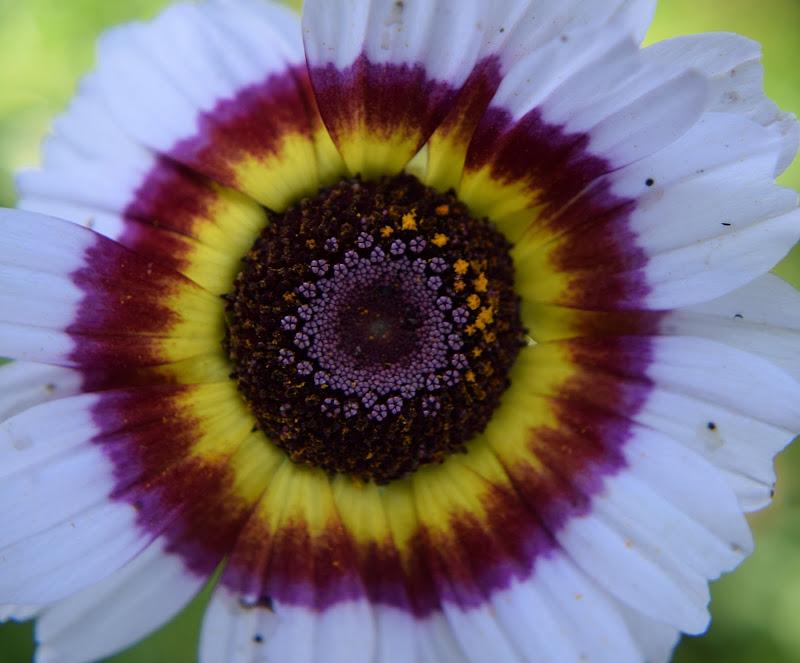 multicolore naturale di irina sirbu