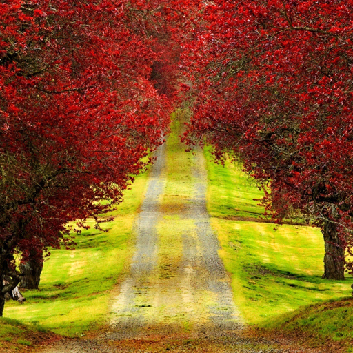 붉은 단풍 나무 live wallpaper 個人化 LOGO-玩APPs