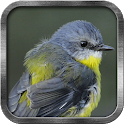 Blue Tit Live Wallpaper icon