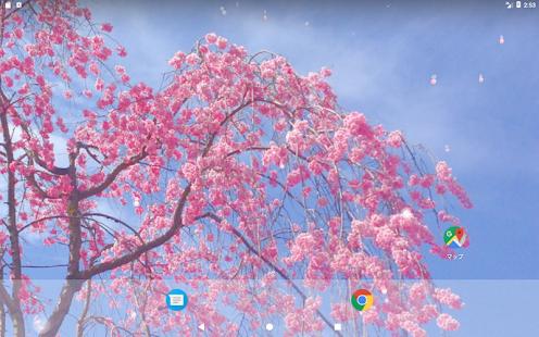 Cherry blossom petals - Full - náhled