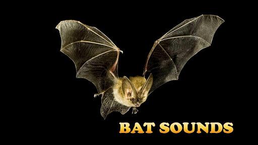 Bat Sounds In Cave