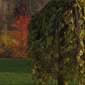 by Bozidarka Scerbe Haupt - Nature Up Close Trees & Bushes