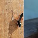 Small ichneumon wasp