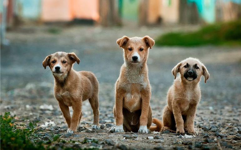 Família de cães