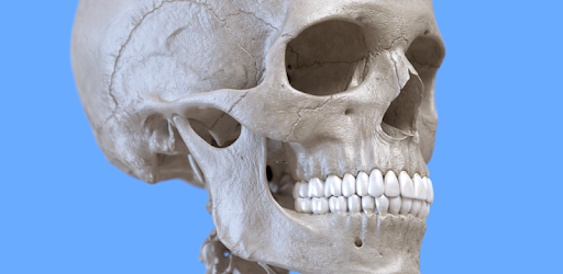 Skelettsystem - 3D Anatomie – Apps bei Google Play