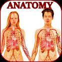 Human anatomy. The human body icon