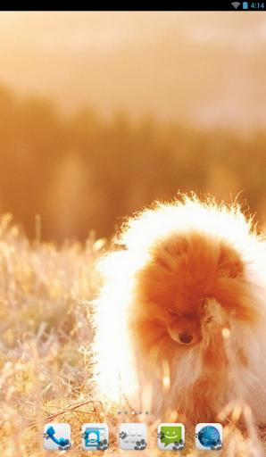 Pomeranian - Theme - Nova ADW