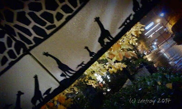 Photo: Grateful for seeing art in my everyday world. An umbrella, ran, and tree leaves.