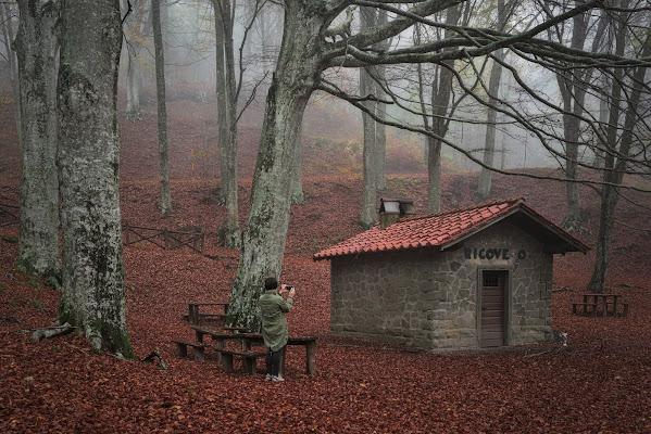 La ragazza nel bosco  di Luca160