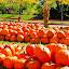 by Theresa Stevens - Public Holidays Halloween ( pumpkins, halloween,  )