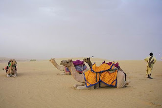 Photo: Désert du Thar au Rajasthan