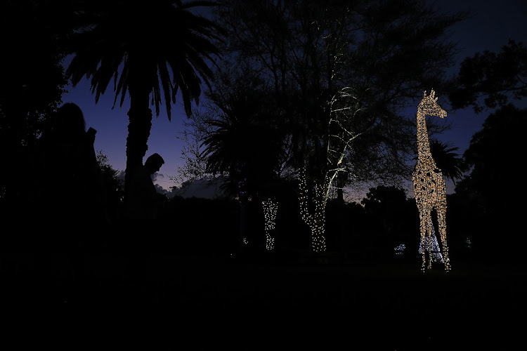 The Festival of Lights at the Johannesburg Zoo. The second annual Joburg Zoo Festival of Lights features an enchanting collection of illuminated life-size animal characters and classical, harmonious entertainment, food and craft night market for visitors to the Joburg Zoo. Picture: Alon Skuy