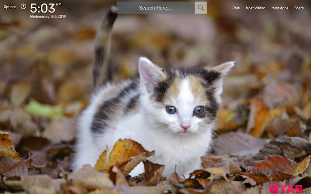 Kittens & Cats Wallpapers Backgrounds