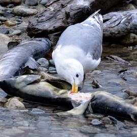 by Keith Sutherland - Animals Birds