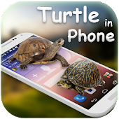 Tortoise in Phone Prank