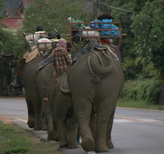 Photo: Day 342 - Parade of Elephants on Their Way to Logging