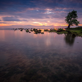 The Lone Tree by Raffy Nadayag - Landscapes Sunsets & Sunrises (  )