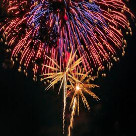 Fireworks by Carol Ward - Public Holidays July 4th ( holiday, alexandria va, parks, 4th of july, fireworks, oronoco bay park,  )