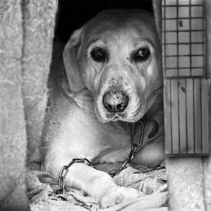 Vita da cani di batfabio
